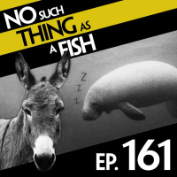Episode 161: No Such Thing As A Magic Donkey