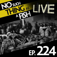 Episode 224: No Such Thing As Mixed-Species Martial Arts