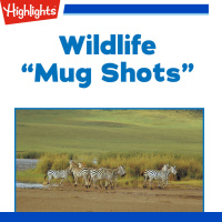 Wildlife: Mug Shots