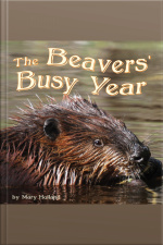 The Beavers Busy Year