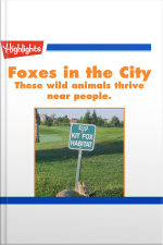 Foxes in the City