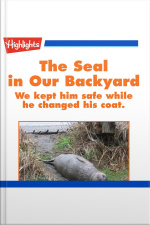 The Seal in Our Backyard