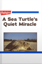 A Sea Turtles Quiet Miracle